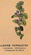 Herbe de Saint-Jean